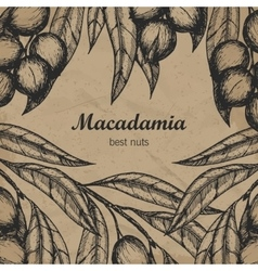 Macadamia branch design template Engraving vector image