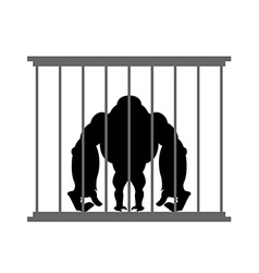 Gorilla in cage animal in zoo behind bars big and vector
