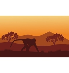 Silhouette of monkey in hills vector image