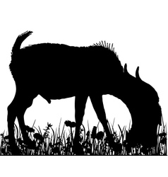 Billy goat in the meadow vector