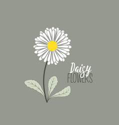 meadow floral background vector image