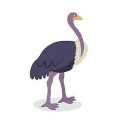 ostrich cartoon flat vector image vector image