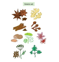 Greens and spices set vector