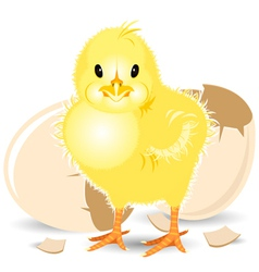 Newborn chick vector