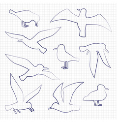 thin line birds silhouettes vector image vector image