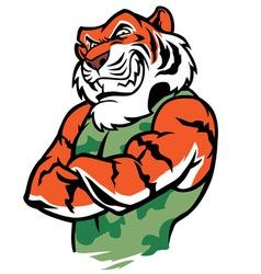 Muscular tiger posing vector