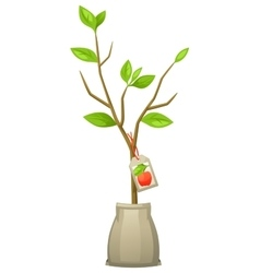 Seedling of apple tree with tag for vector