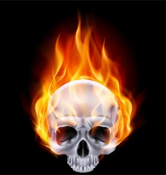 Chrome metal fair skull 02 vector image vector image