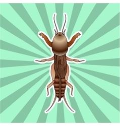 Anatomy of the european mole cricket sticker vector