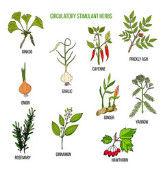 Circulatory stimulant herbs vector