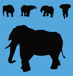 elephant silhouette collection vector image vector image