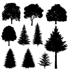 forest coniferous and deciduous fir trees vector image vector image