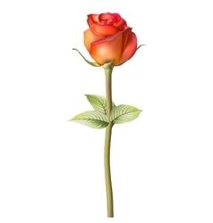 Orange red Rose EPS 10 vector image