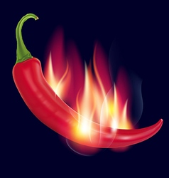 Pepper on fire on a dark vector