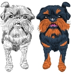 Sketch red dog brussels griffon breed vector