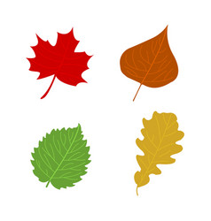 cartoon flat autumn leaves vector image