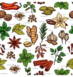 Herbs And Spice Color Sketch Pattern vector image