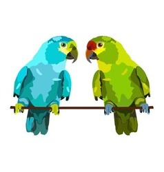 Two lovely parrots on white background vector