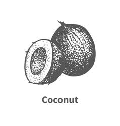 Doodle sketch hand-drawn coconut vector