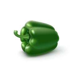 Green sweet bulgarian bell pepper on background vector