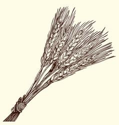Bunch of ripe wheat vector