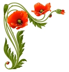 corner pattern with red poppies and ladybug vector image