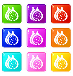 Fig fruit icons 9 set vector