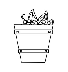Wooden basket with harvest grapes thin line vector