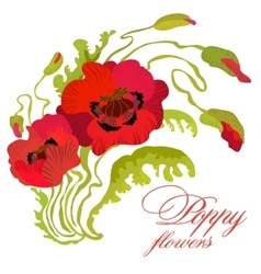 Bouquet of poppies stems leaves and buds isolated vector