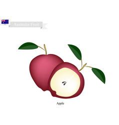 Fresh apple the national fruit of australia vector