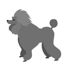 Poodle dog flat vector
