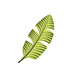 Tropical leaf icon vector