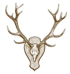 Engraving deer skull with horns vector