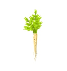 Fresh white carrot primitive realistic vector