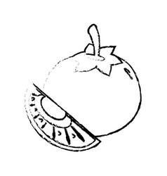 tomato slice food diet healthy sketch vector image