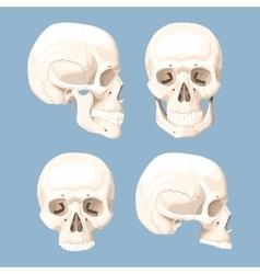 Set of human skulls vector image