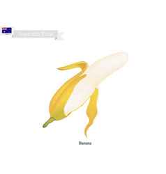 Golden bananapopular fruits in australia vector