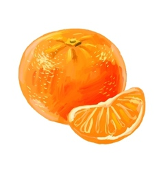 Picture of mandarin vector