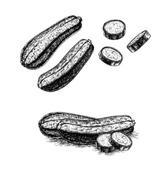 Hand drawn set of zucchini sketch vector image vector image