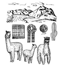 Ink hand drawn alpaca icon set vector