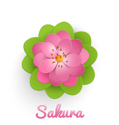 isolated paper cut sakura flower vector image