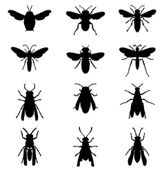bees and wasps vector image