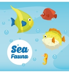 Sea fauna graphic design vector