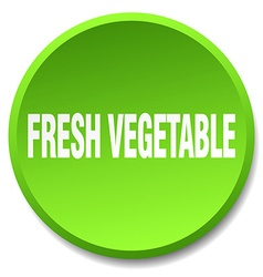 fresh vegetable green round flat isolated push vector image