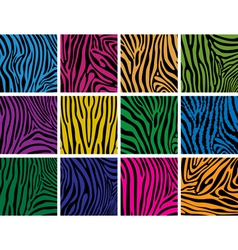 Colorful skin textures of zebra vector