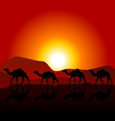 Silhouettes of caravan of camels on desert sunset vector image vector image