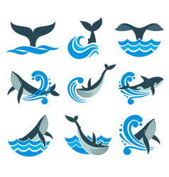 Wild whale in sea waves and water splashes vector