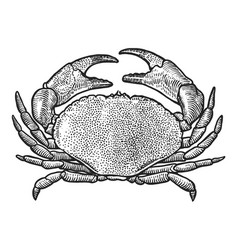 Crab drawing engraving ink line a vector