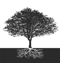 roots vector image