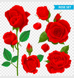 Rose realistic transparent set vector